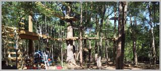 Tree Consultant - Arborist