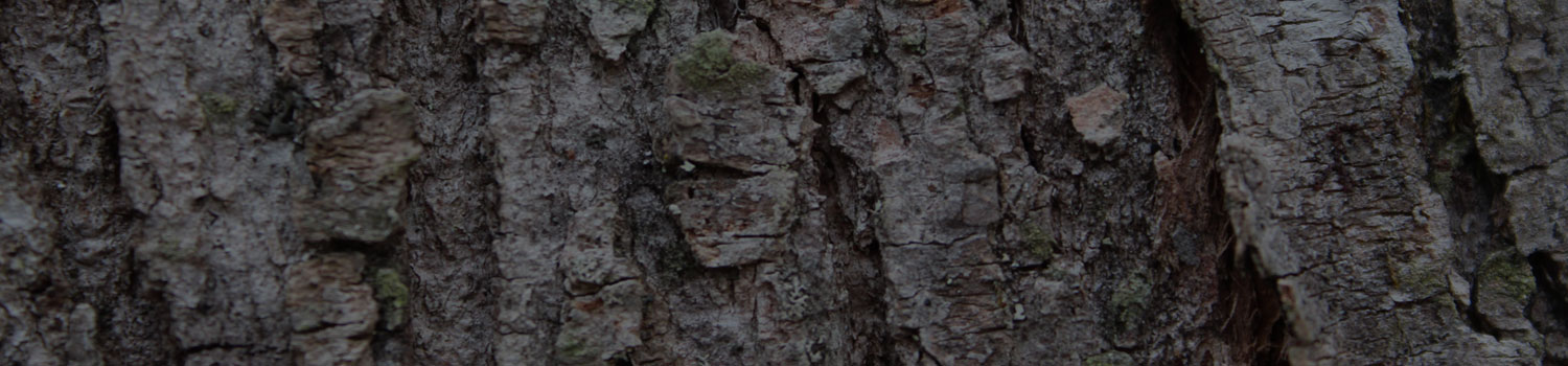 tree-bark-background