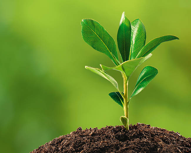 Caring for Small, Young Trees