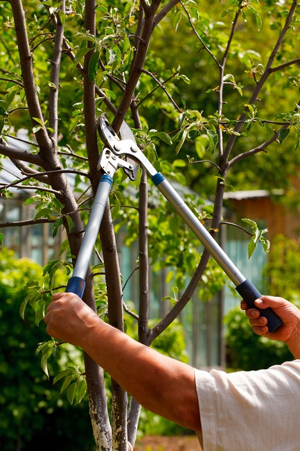 Why You Should Care About Tree Pruning