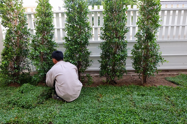 Using Small Trees For Landscaping